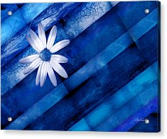 White Daisy On Blue Two Acrylic Print by Ann Powell