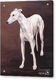 White Greyhound Acrylic Print by Charlotte Yealey