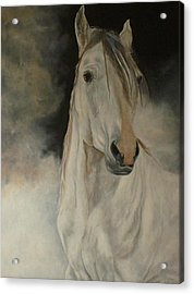 White Horse Acrylic Print by Julie Bond