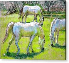 White Horses Grazing Acrylic Print by Sue Halstenberg