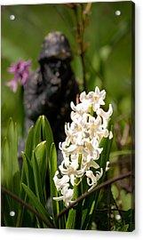 White Hyacinth In The Garden Acrylic Print by  Onyonet  Photo Studios