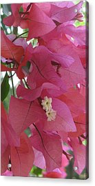 White In Pink Acrylic Print by Russell Smidt