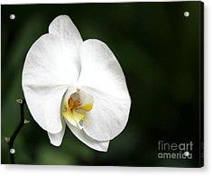 White Light Acrylic Print by Sabrina L Ryan