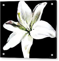 White Lily - Elegant Black And White Floral Art By Sharon Cummings Acrylic Print by Sharon Cummings