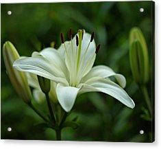 White Lily Acrylic Print by Sandy Keeton