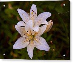 White Lily Starburst Acrylic Print by Omaste Witkowski