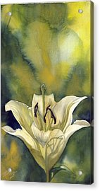 White Lily With Blue Acrylic Print by Alfred Ng