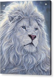 White Lion Acrylic Print by Lucie Bilodeau