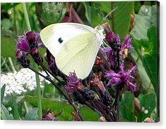 White On Purple On Green Acrylic Print by Robert Lance