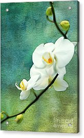 White Orchids Acrylic Print by Darren Fisher