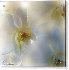 White Orchids Acrylic Print by Mikki Cucuzzo