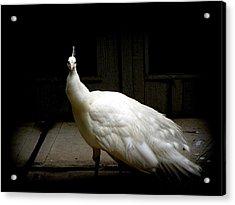 White Peacock Acrylic Print by Tilen Hrovatic