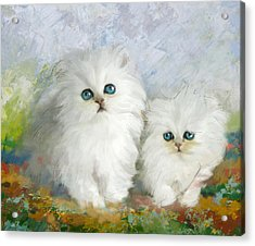 White Persian Kittens  Acrylic Print by Catf