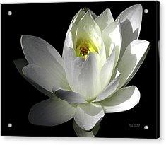 White Petals Aquatic Bloom Acrylic Print by Julie Palencia