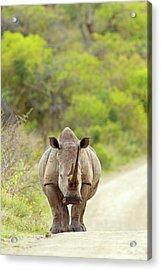 White Rhino Acrylic Print by Bildagentur-online/mcphoto-schaef