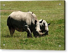 White Rhinoceros Acrylic Print by Aidan Moran