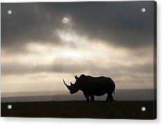 White Rhinoceros At Sunset Kenya Acrylic Print by Tui De Roy