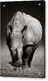 White Rhinoceros  In Due-tone Acrylic Print by Johan Swanepoel