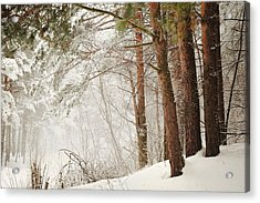 White Silence Acrylic Print by Jenny Rainbow