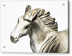 White Stallion Acrylic Print by Susan Leggett