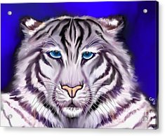 White Tiger Acrylic Print by Nick Gustafson