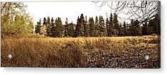 White Tree Panorama Larry Darnell Acrylic Print by Larry Darnell