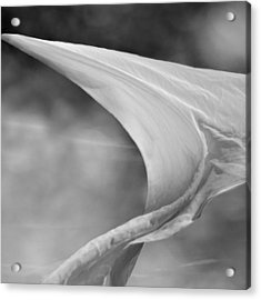 White Wing 1 Acrylic Print by Laura Fasulo