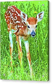 Acrylic Print featuring the photograph Whitetailed Deer Fawn Digital Image by A Gurmankin