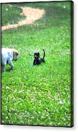 Whos This Acrylic Print by Kathy Sampson