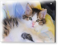 Wide Eyed Kitten Acrylic Print by Kenny Francis