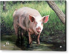 Wilbur In His Woods Acrylic Print by Sandra Chase