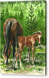Wild Alberta Mare And Foal Acrylic Print by Linda L Martin