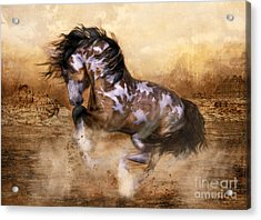 Wild And The Free Acrylic Print by Shanina Conway