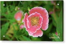 Wild Flower Acrylic Print by Brittany Perez
