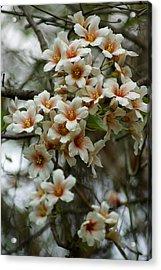 Wild Flowering Beauty Acrylic Print by Kim Pate