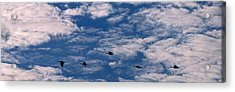 Wild Goose Heaven Acrylic Print by Skip Willits