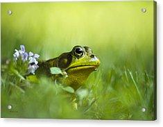 Wild Green Frog Acrylic Print by Christina Rollo