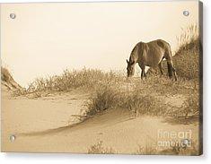 Wild Horse Acrylic Print by Diane Diederich
