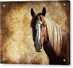 Wild Horse Fade Acrylic Print by Steve McKinzie