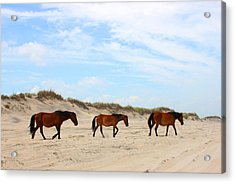Wild Horses Of Corolla - Outer Banks Obx Acrylic Print by Design Turnpike