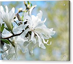 Wild Magnolia Blooms Acrylic Print by Pamela Patch