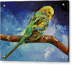 Wild Parakeet Acrylic Print by Michael Creese