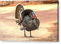 Wild Tom Turkey Acrylic Print by Robert Bales
