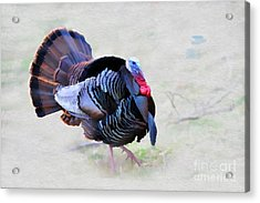Wild Turkey Artistic Acrylic Print by Dan Friend
