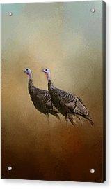 Wild Turkey At Shiloh Acrylic Print by Jai Johnson