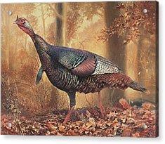 Wild Turkey Acrylic Print by Hans Droog