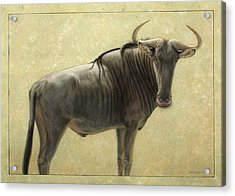 Wildebeest Acrylic Print by James W Johnson