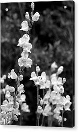Wildflowers/bw1 Acrylic Print by Diana Shay Diehl