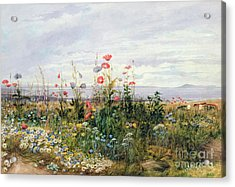 Wildflowers With A View Of Dublin Dunleary Acrylic Print by A Nicholl