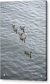 Willamette River Ducks Acrylic Print by Peter French